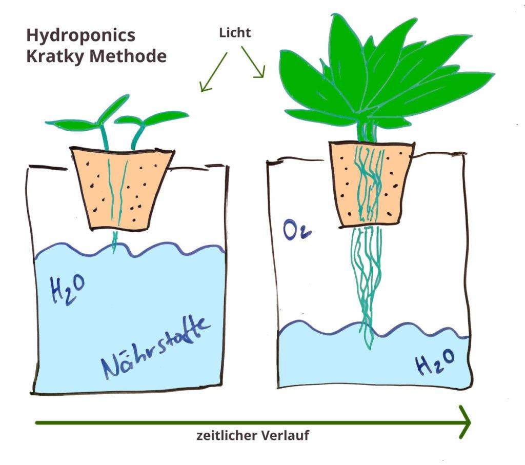 Hydroponics - Die Kratky Methode