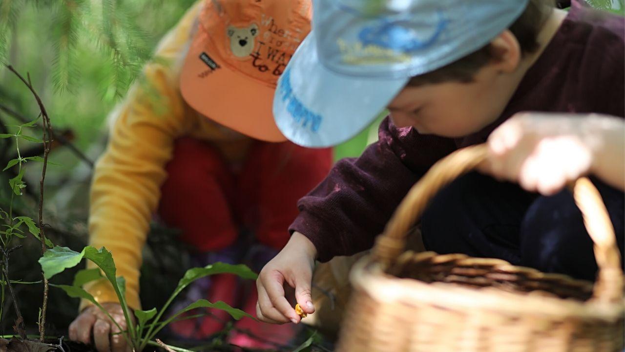 Waldkita Erfahrung – erzieht der Wald unsere Kinder?